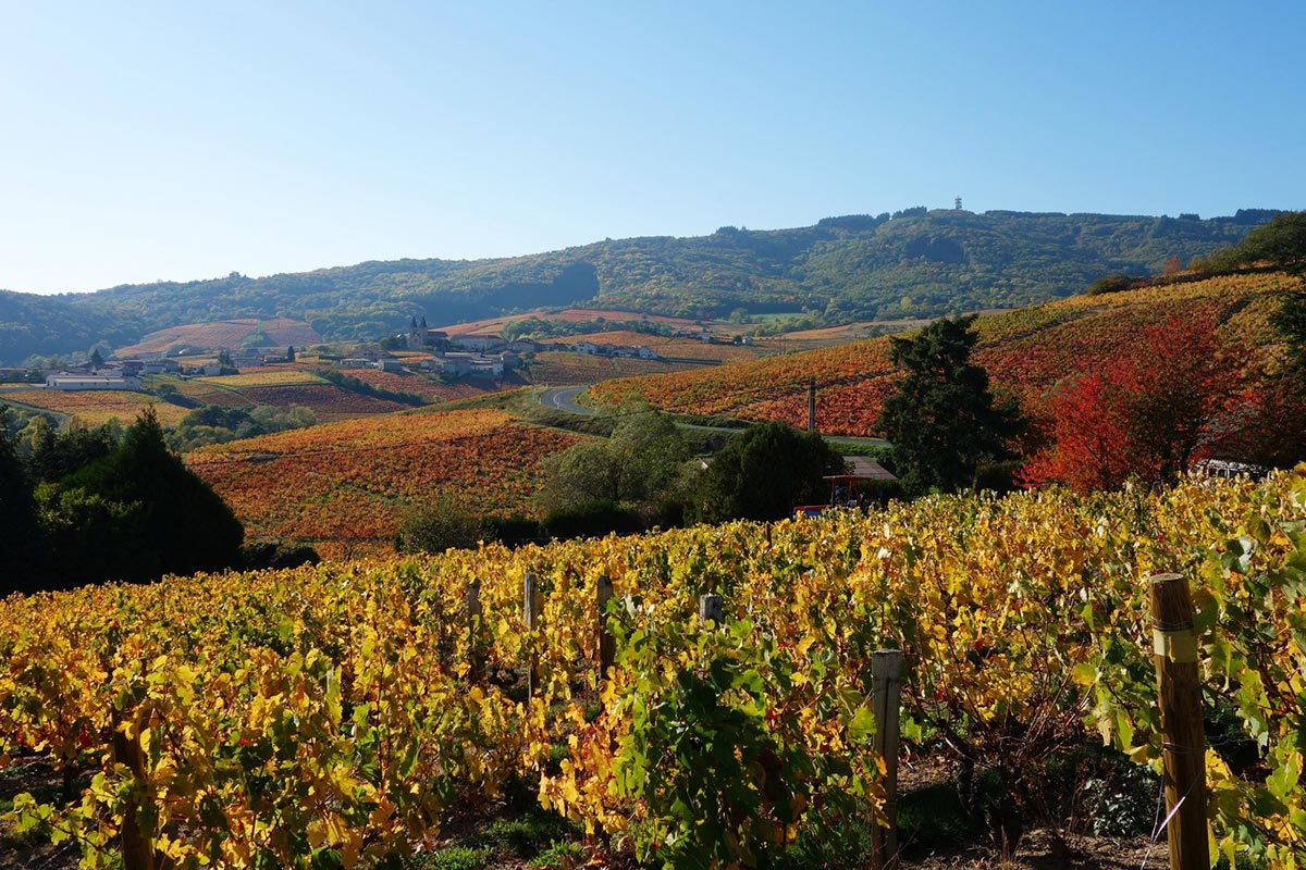 Maison d'Hôtes en Beaujolais - Landscape around in autumn